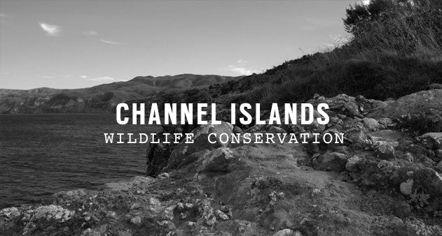 Channel Islands National Park | Parks Project