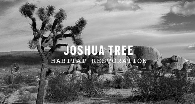 Joshua Tree National Park | Parks Project