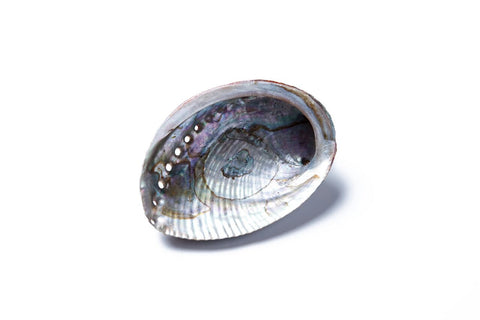 ABALONE SHELL SMUDGE TRAY