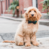 English Plaid Bow Tie Collar (Dog) - Sarah Virginia Home