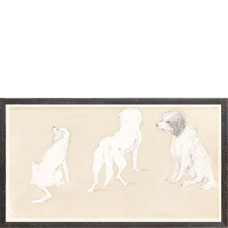 Dog Study - Sarah Virginia Home
