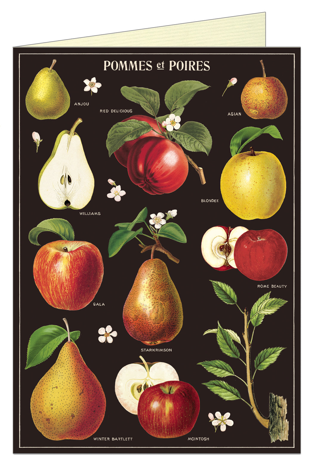 Greeting Card Apple & Pears
