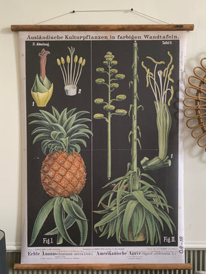 Pineapple and Agave Wall Chart