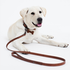 Elk Dog Lead (Tan)