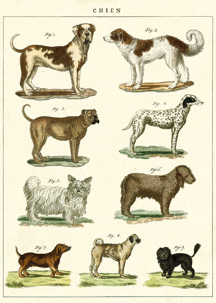 Dogs Vintage Poster & Gift Wrap