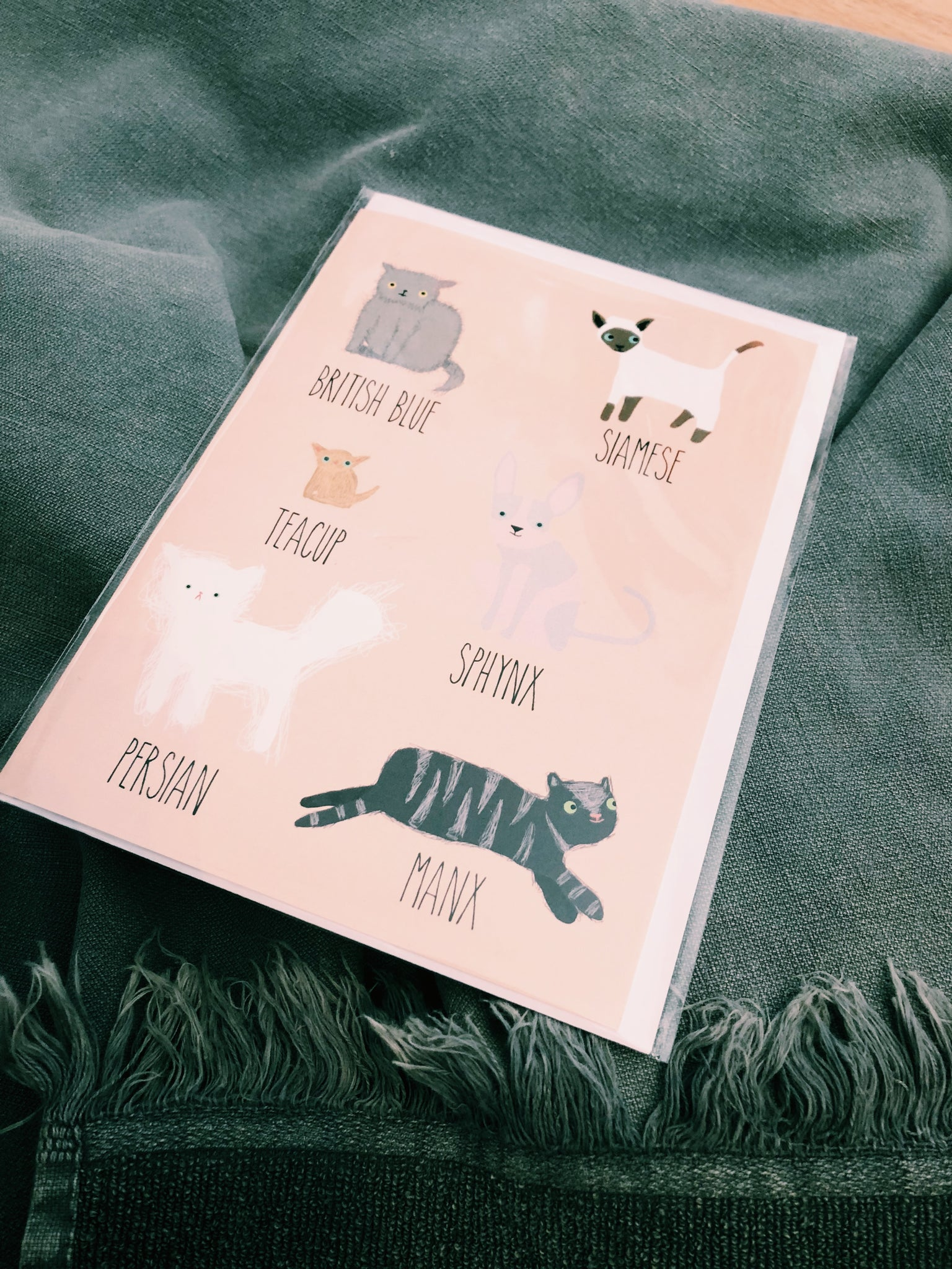 ALL THE CATS - ALL OCCASIONS CARD - JM122