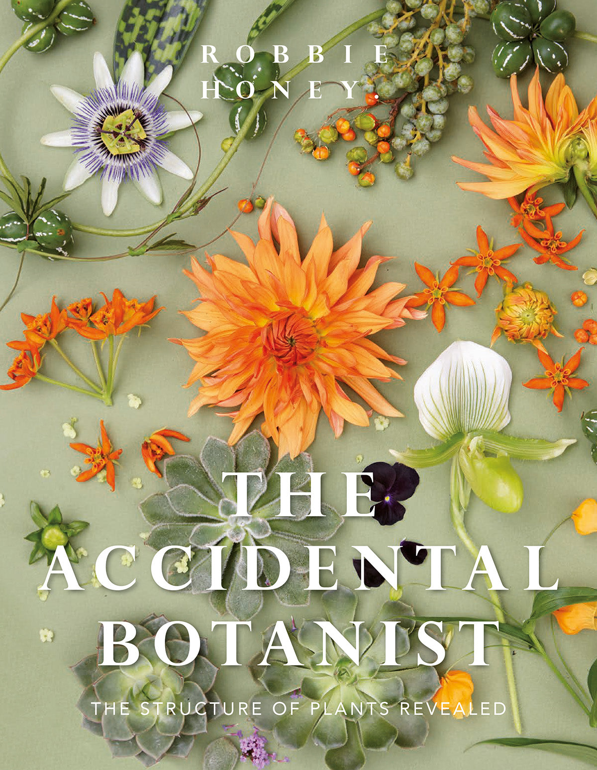 Image result for The Accidental Botanist: The Structure of Plants Revealed by Robbie Honey