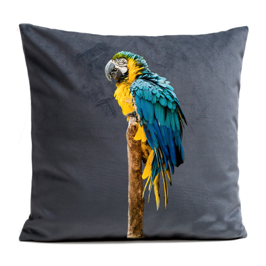 Artpilo Cushion Cover Blue Parrot Grey Velvet - Artpilo