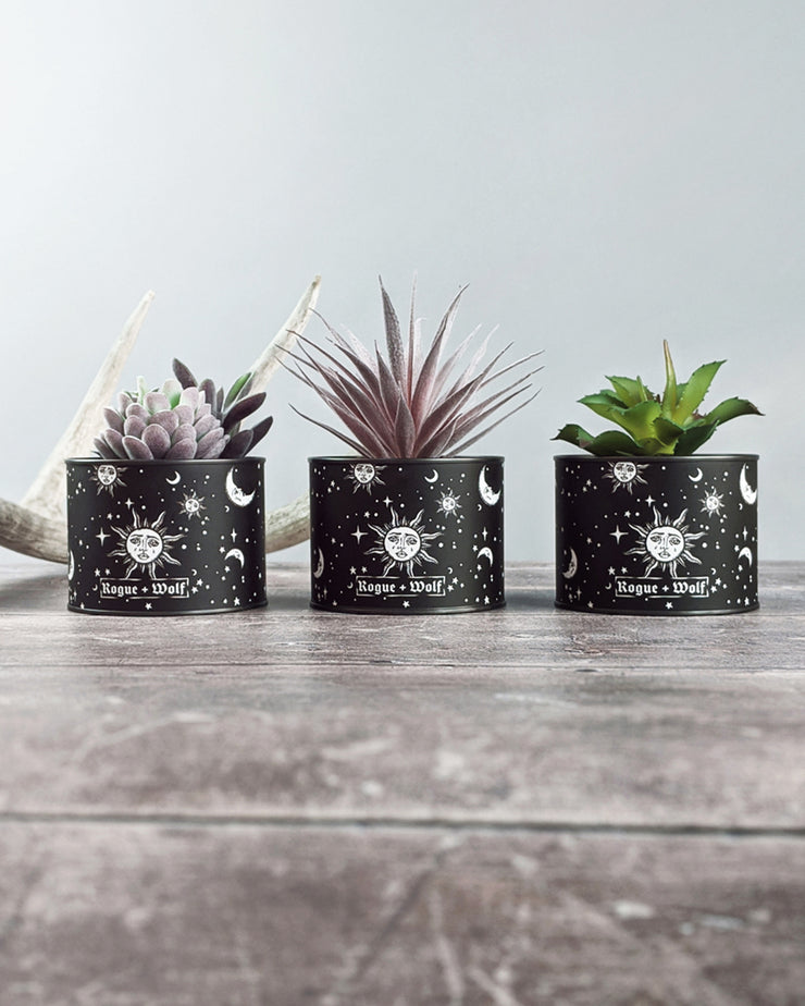 Set of 3 Artificial Celestial Succulents Plants in Pots