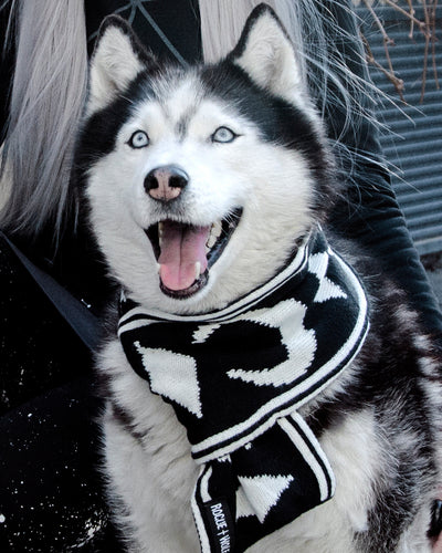 Moon Pupper Scarf