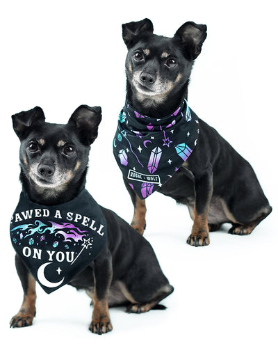 I Pawed a Spell on You Pet Bandana - Dog or Cat