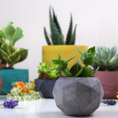 Intentional Grain Concrete Geo Planter