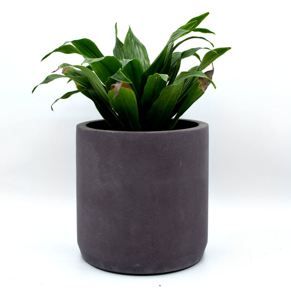 Intentional Grain Round Concrete Planter
