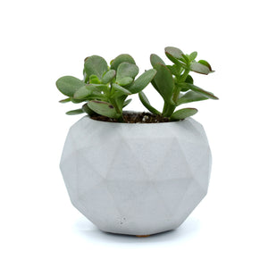 Intentional Grain Large Geometric Planter