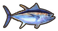 Ahi (Tuna) Decal