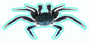 a'ama crab decal