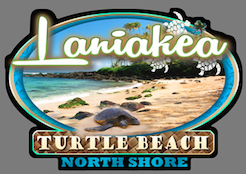 Laniakea turtle beach decal