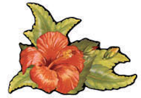 Hibiscus Retro Decal