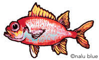 menpachi fish decal