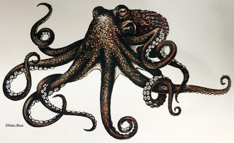 brown heʻe octopus decal