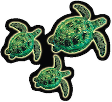 three realistic hawaiian green sea turtles decal