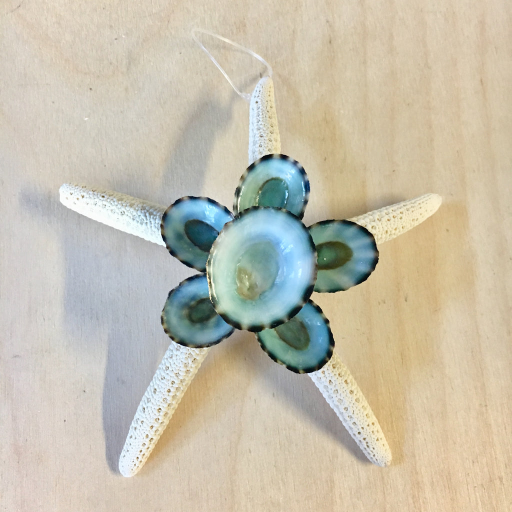 Starfish Limpet Ornament