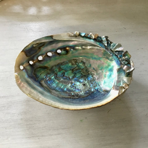 Abalone Shell Soap Dish