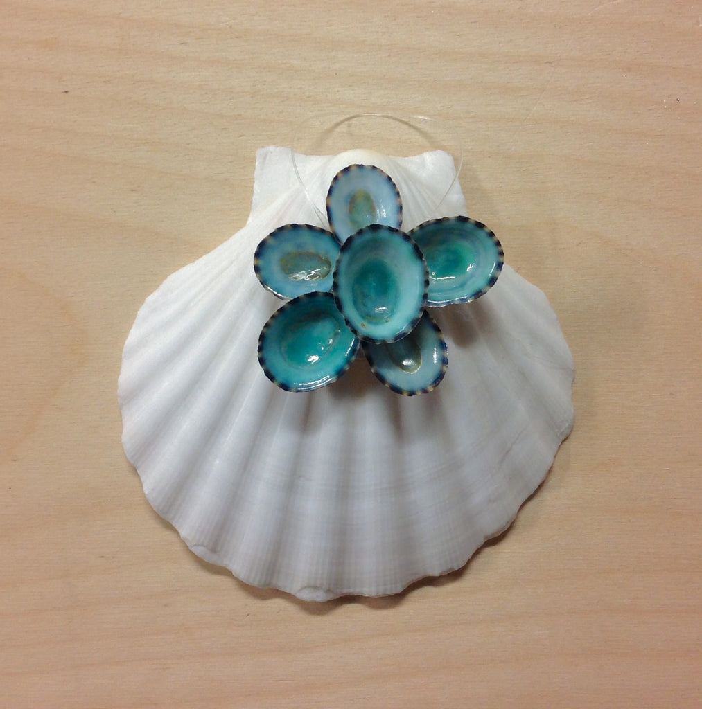Scallop Shell Limpet Ornament