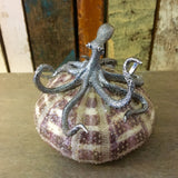 Silver Sea Urchin Octopus Shell Art