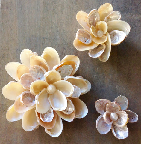 Seashell Wall Flower