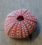 Super Pink Sea Urchin