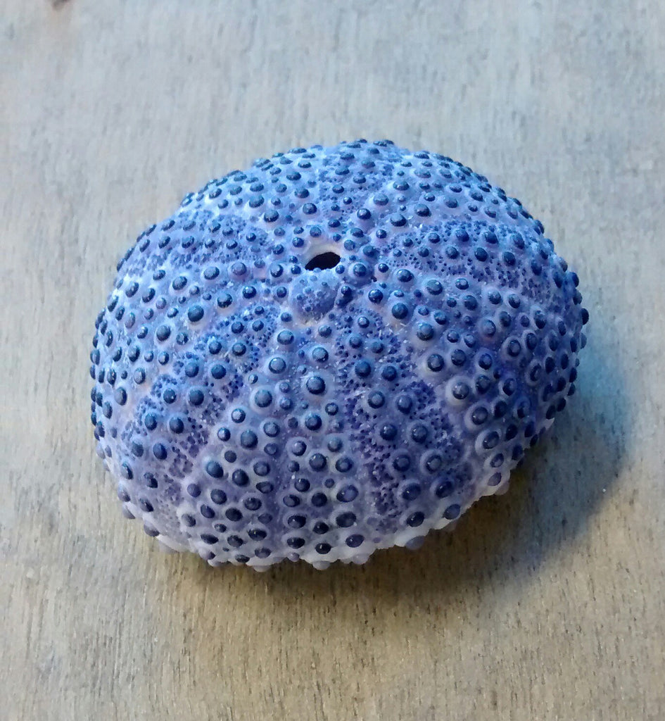 Deep Purple Sea Urchin