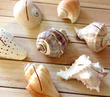 Seashell Card Holder
