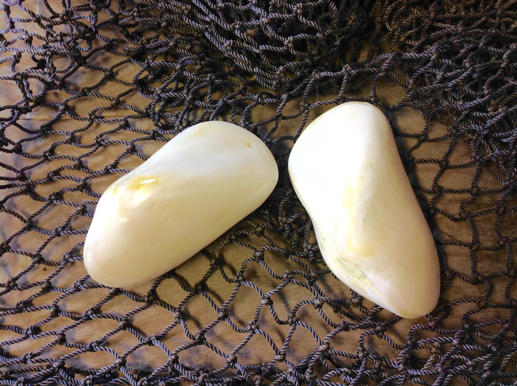 Polished White Mussel Shells