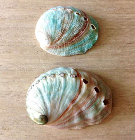 Natural Small Abalone Shell