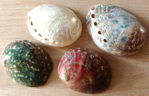 Polished Chino Abalone Shell