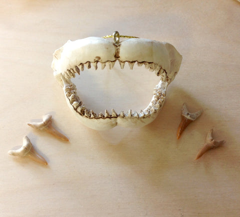 Shark Jaw Ornament