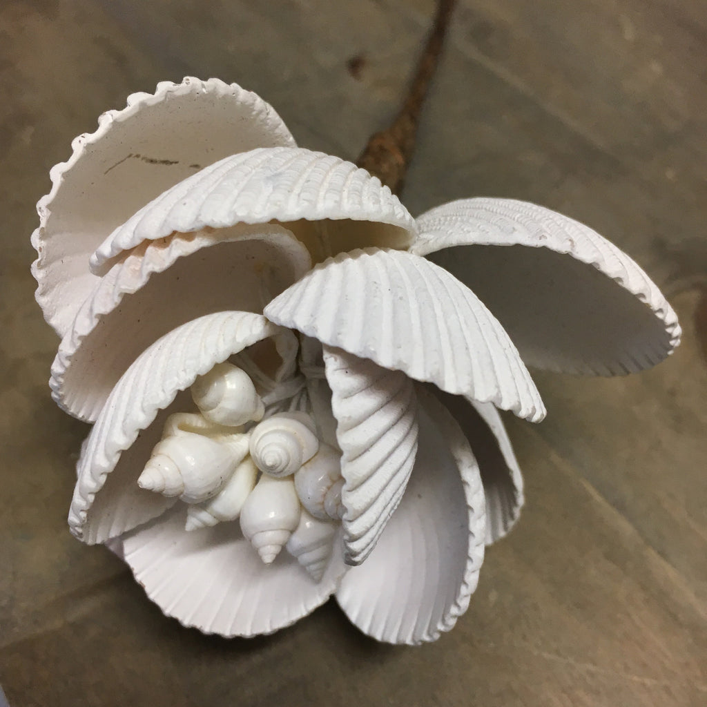 Cockle Shell Sea Flower