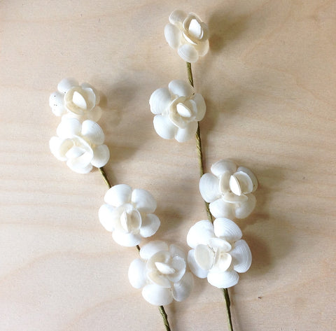 White Clamshell Flowers