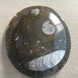 Fossil Ammonite Disk