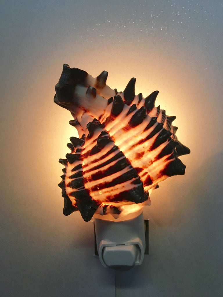 Black Murex Nightlight