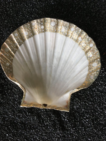 Gold Scallop Shell Dish