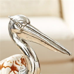 Volute Shell Pelican
