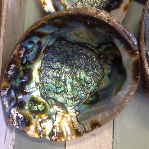 Extra Large Green Abalone Seashell