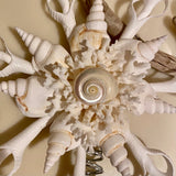 White Seashell Star Tree Top