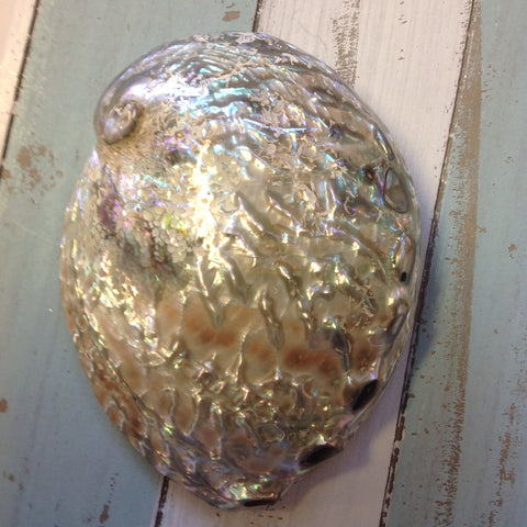 Pink Polished Abalone Shell