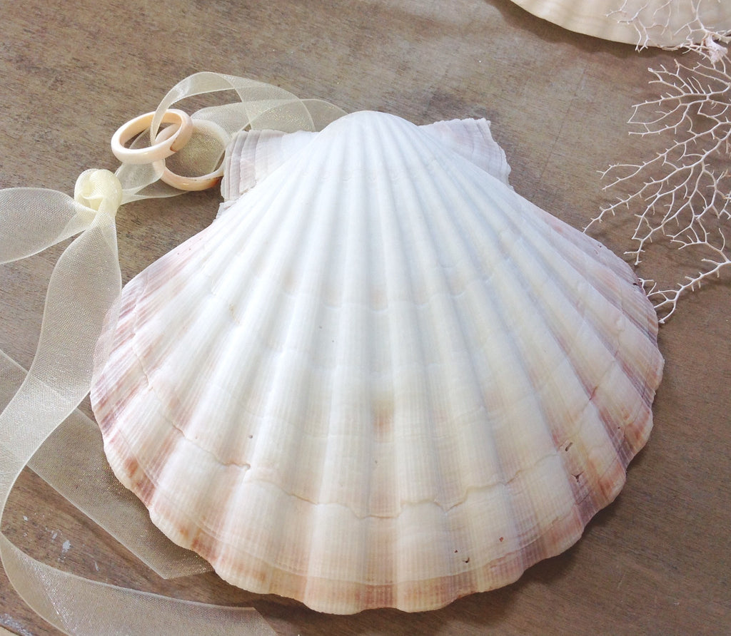 "Scallop Shell Wedding ""Pillow"""