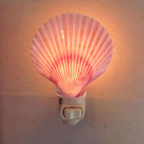 Polished Scallop Shell Nightlight