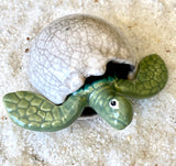 Hatching Turtle Egg