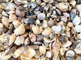 Box of Seashells